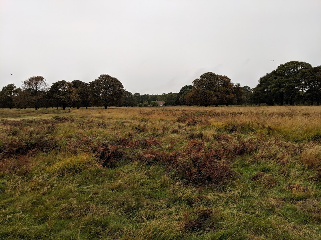 Playground Earth | Richmond Park l Grassy Meadow
