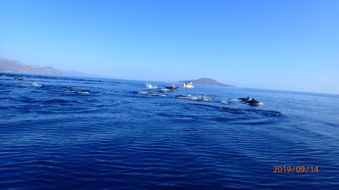 Playground Earth | Loreto l Dolphins in the Bay